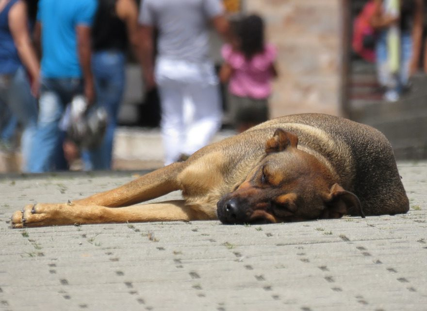 αδέσποτος σκύλος που κοιμάται στο πεζοδρόμιο